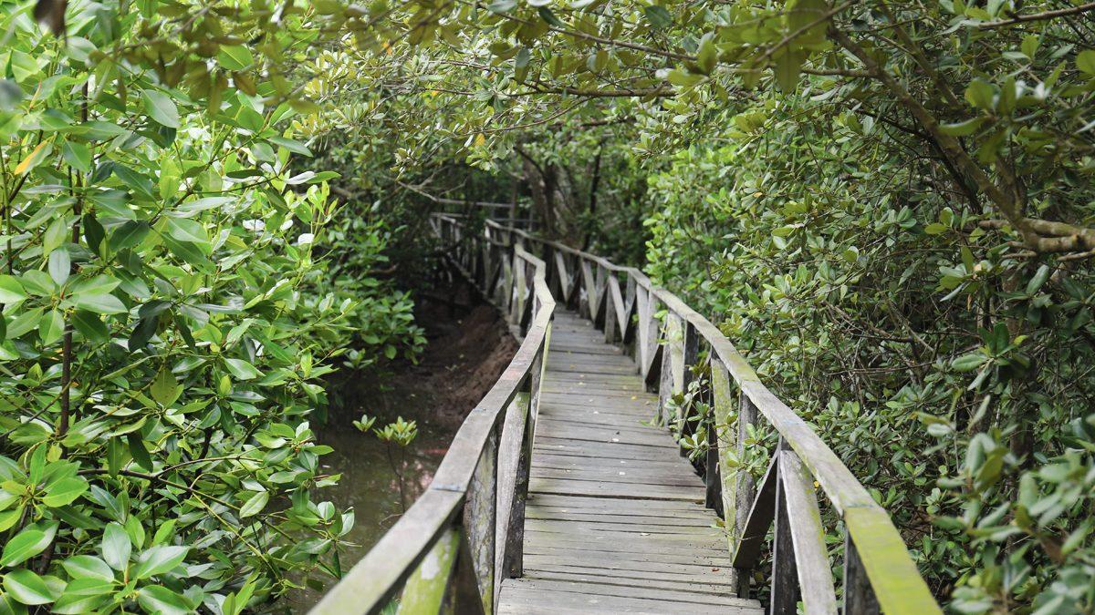 Sfidn Fits Blog 7 Wisata Hutan Mangrove Untuk Liburan Weekend Anda