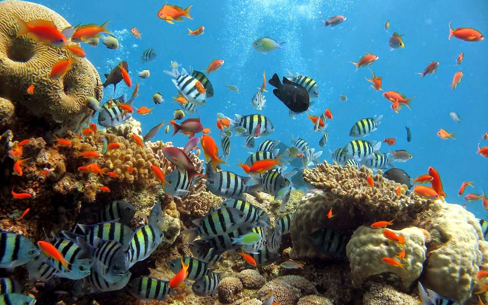 35+ Daftar Gambar Pemandangan Bawah Laut Asli ...